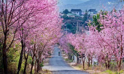 8 điểm đến đẹp nhất Việt Nam để du lịch vào tháng 1 Du Lịch