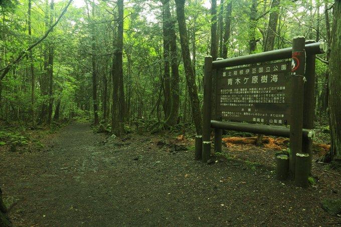 Bên trong khu rừng tự sát ở Nhật Bản