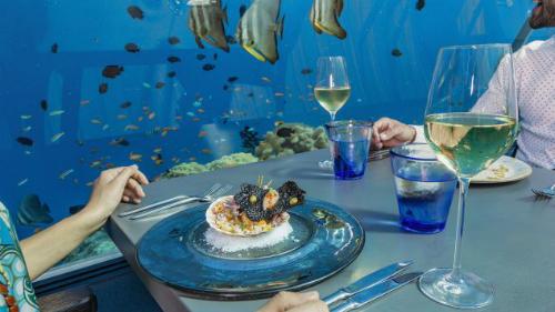 Trao đổi với CNN Travel, Bếp trưởng Bjoern van den Oever nhấn mạnh:  Chúng tôi giữ chuyển động (của đàn cá) xung quanh bàn ăn của thực khách  nhằm tránh đi sự nhàm chán khi ngồi ăn. Bên cạnh đó, chất lượng thức ăn  cũng được bảo đảm. Chúng tôi muốn một điều gì đó thật đặc biệt.