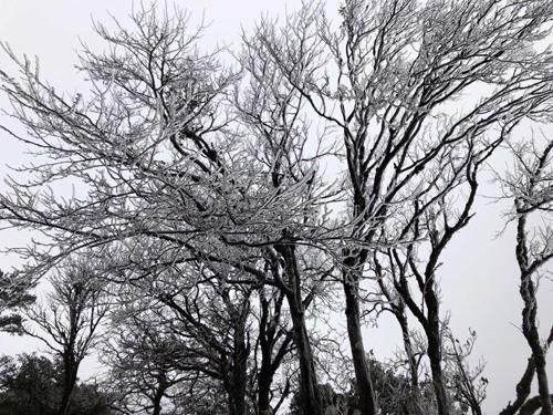 Đây là lần thứ hai hiện tượng băng tuyết xuất hiện ở đỉnh Phia Oắc trong vòng chưa đầy 2 tháng qua. Ông Hoàng Mạnh Ngọc, Giám đốc trang trại Kolia ở Phia Oắc, cho biết mỗi khi có hiện tượng này, lượng khách tham quan tại đây tăng lên gấp khoảng 10 lần.