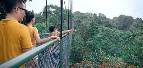 Dạo bước trên cầu treo TreeTop WalkTiếp tục chuỗi hoạt động khám phá thiên nhiên, gia đình Hoàng Bách tận hưởng cảm giác thư thái khi đi bộ trên những ngọn cây qua trải nghiệm trên cầu treo TreeTop Walk ở độ cao 250m.Từ đây, cả nhà có thể phóng tầm mắt tận hưởng toàn bộ khung cảnh thiên nhiên xung quanh.Cầu treo TreeTop Walk nằm trong tổng thể hồ chứa nước MacRitchie Reservoir  khu bảo tồn thiên nhiên với hồ chứa nước lớn nhất Singapore, các đường chạy bộ xuyên quốc gia, các con đường mòn đi bộ tự nhiên và công viên bảo tồn. Đây là địa điểm lý tưởng dành cho những người yêu thiên nhiên, ham thích chạy bộ và các môn thể thao dưới nước.