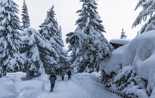 Cũng vì điều kiện thời tiết quá xấu, cộng với lo ngại có khả năng xảy ra vụ sạt lở tuyết cao nên chính phủ Thụy Sĩ đã quyết định đóng cửa mọi hoạt động tại khu nghỉ dưỡng.
