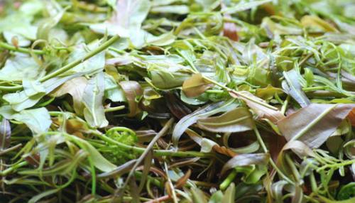 Món ăn có vị cay nồng của lá cây tươi, kèm theo chút vị ngọt của các loại gia vị. Ảnh:Tingialai.