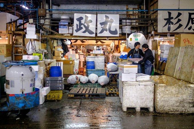 Nơi cá ngừ bán với giá hàng triệu USD một con