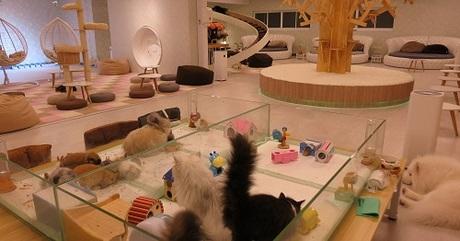 Cà phê mèo là dịch vụ hốt bạc tại Bangkok. Ảnh:Mango Zero.