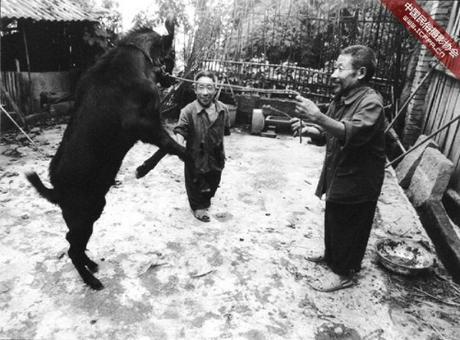 Người làng cũng có một câu chuyện truyền miệng về một con rùa đen do người đàn ông họ Wang phát hiện ra. Sau khi thấy con vật có tứ chi kỳlạ này, dân làng đã giết và ăn thịt nên đời con cháu của họ phải trả giá.