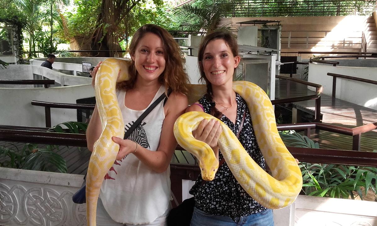 Kết quả hình ảnh cho Trung tâm Nghiên Cứu Rắn độcHoàng Gia Thái Lan (Snake Farm)