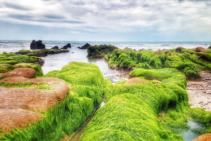 Biển Cổ Thạch được ví như chốn tiên cảnh vào mùa rêu mọc