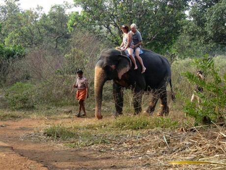 Hai con voi Ấn Độ bị 16 du khách cưỡi suốt một tiếng