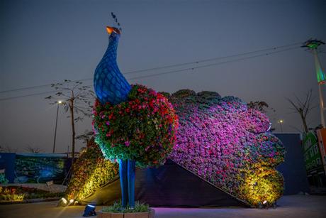 Chú chim công khổng lồ khoe sắc giữa trời đêm, với muôn ngàn sắc tía. Theo sự chuyển màu của sắc hoa trong ánh đèn, vẻ như chú công đang chuyển động trong điệu vũ sắc màu của mình.