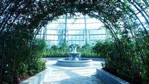 Sắc hoahồng tại vườn yêu của Vinpearl Nha Trang - 7