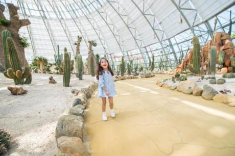 Đồi Vạn Hoa thơ mộng  Đồi Vạn Hoa nằm ở đỉnh cao nhất của Vinpearl Land, rộng hơn 35.000m2, quy tụ 5 nhà kính hiện đại đầu tiên tại Việt Nam, gây ấn tượng với hàng trăm chủng loại thực vật khác nhau được phân chia thành các chủ đề đặc sắc. Đến đây rồi, du khách không cần đi đâu xa cũng đã thấy được cảnh sắc của năm châu, bốn bể.