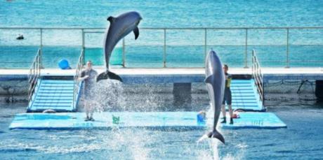 Trình diễn cá heo  Những chú cá heo thông minh ở Thuỷ cung cũng góp mặt trong MV với vẻ ngoài dễ thương.
