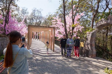 Một con đường hoa anh đào rực lên sắc hồng, khiến du khách bất ngờ và không thể không chớp lấy cơ hội được selfie với loài hoa đặc trưng của nước Nhật.