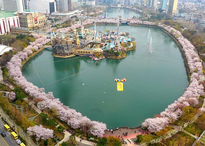 5 lễ hội hoa anh đào nổi tiếng ở Hàn Quốc