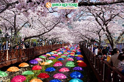 Giảm 5 triệu đồng tour ngắm hoa anh đào tại Seoul  Busan