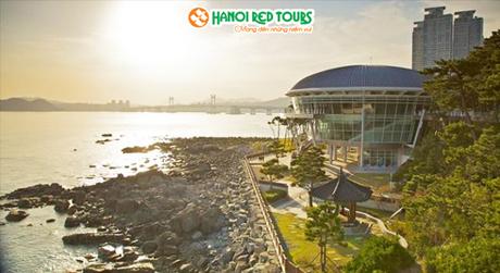 Giảm 5 triệu đồng tour ngắm hoa anh đào tại Seoul  Busan - 4