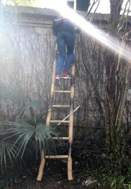 Một du khách trèo thang vào vườn thú. Ảnh:Sina.