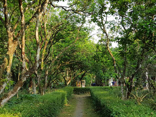 Ngôi làng với những ngôi nhà rường cổ có tuổi đời cả trăm năm. Mùi hoa  thanh trà sẽ đón bạn ngay từ đầu làng. Và một buổi sáng mùa xuân, không  gì dễ chịu và an nhiên hơn khi được đi dạo trên những con đường làng  quanh co, vắng vẻ, quyện trong mùi hương hoa thanh trà đang vụ nở rộ.