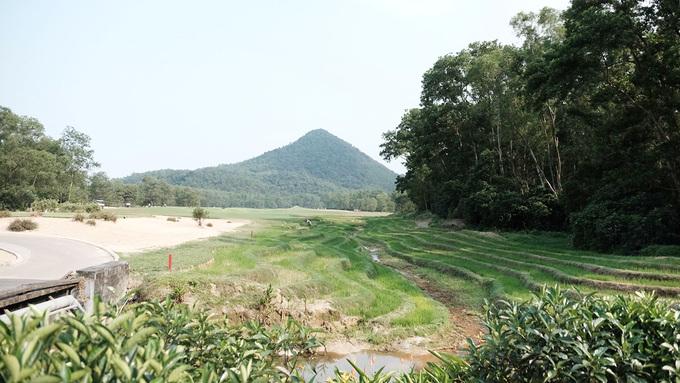 Sân golf ở Huế cho phép trồng lúa để tạo thu nhập cho người dân