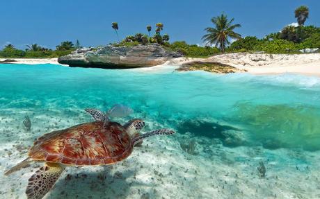 Playa del Carmen là điểm đến tuyệt vời của Mexico. Ảnh minh họa: Nomad List