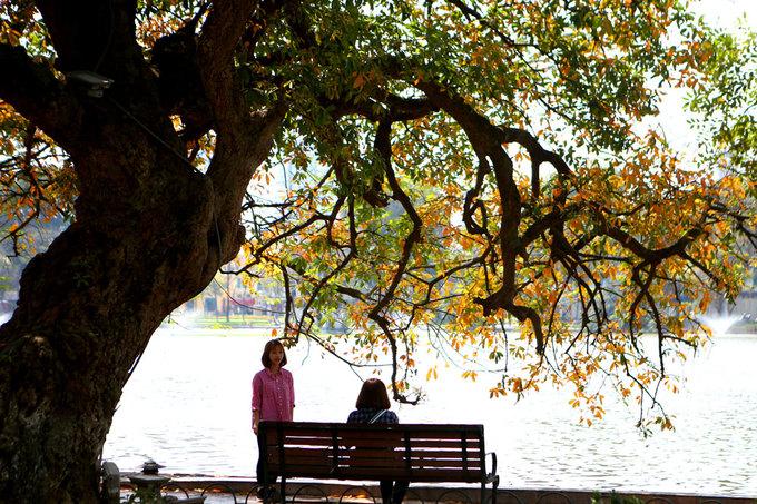 Lộc vừng Hồ Gươm mùa thay lá