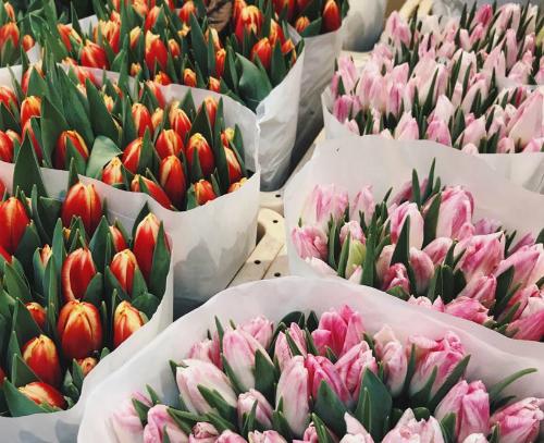 Hoa tulip trong chợBloemenmarkt