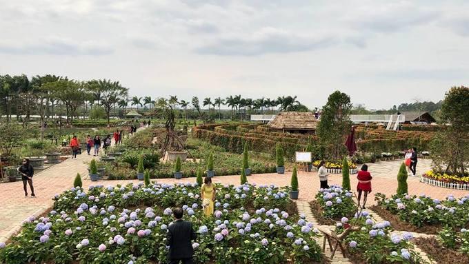 Mê cung bằng cây rộng 10.000 m2 ở ngoại thành Hà Nội