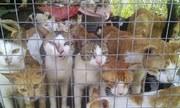 Chợ thịt mèo tại TP HCM gây phẫn nộ khi lên báo nước ngoài