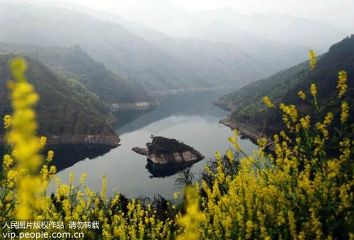 Vốn được mệnh danh là đảo rùa may mắn, tảng đá lớn hình rùa mỗi năm chỉ nổi một lần trong khoảng ba tháng, trên sông Trường Giang ở Trùng Khánh, Trung Quốc.