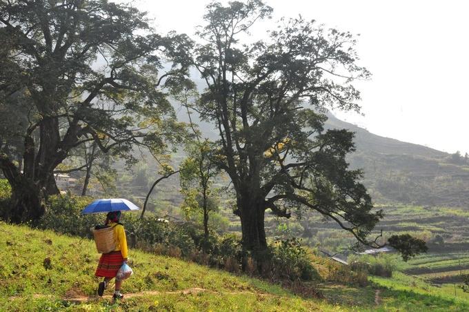 Ngôi làng trăm tuổi bị lãng quên ở Đồng Văn