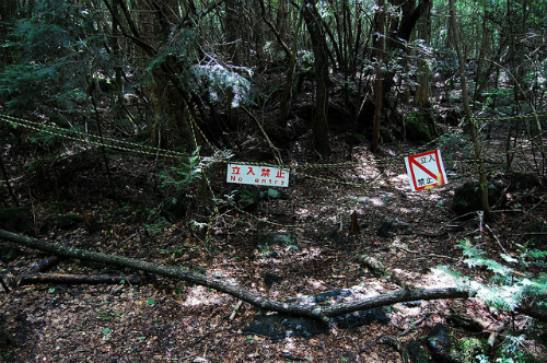 Nhiều người cho biết, khu rừng này luôn tồn tại một bầu không khí đáng sợ, ám ảnh cho bất kỳ ai từng đặt chân đến. Ảnh:JPvisitor.
