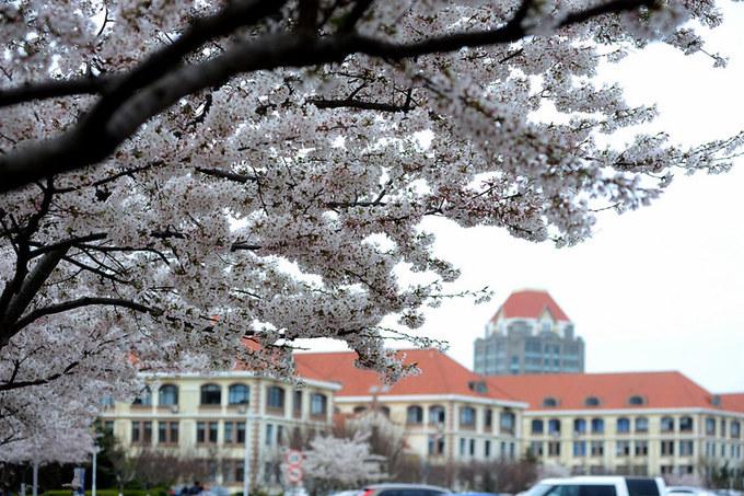 Sắc hoa anh đào ở các trường đại học khắp Trung Quốc