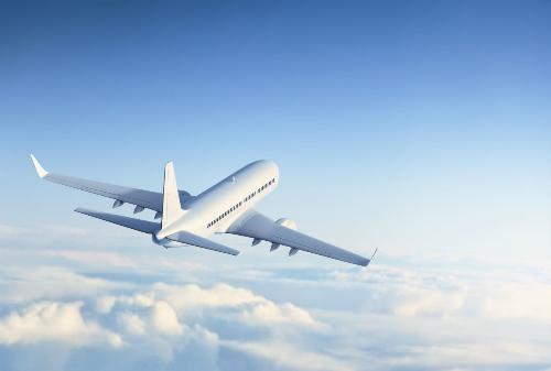 Thú cưng ngồi nhầm trong khoang hành lý, máy bay phải hạ cánh