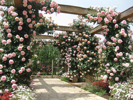 Ashikaga Park  Nổi tiếng nhất là đường hầm hoa Tử đằng vào cuối tháng 4 đều tháng 5. nơi đây là điểm du lịch hấp dẫn sau mùa hoa anh đào  du khách có thể tham quan những khu vực khác của công viên, có những vườn ươm nhiều loại hoa và cây kiểng của Nhật Bản,