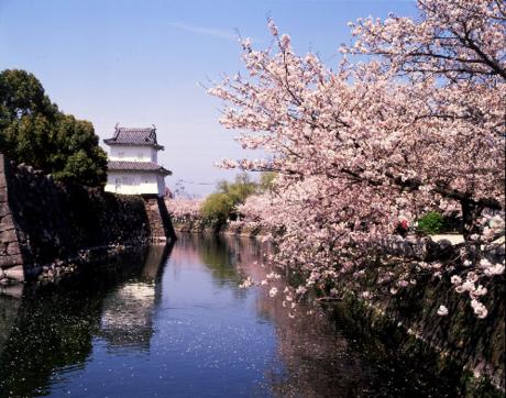 Mặt nước phản chiếu bóng hồng của hoa anh đào tạo nên khung cảnh thiên nhiên thơ mộng.