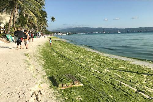 Tảo phát triển tập trung tại bờ biển thuộc đảo Boracay khi thủy triều xuống vào ngày 22/3 .Ảnh: ABS-CBN