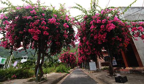 Để đến con đường Bạch Thái Bưởi, bạn qua cầu Bình Tân, rẽqua đường Nguyễn Văn Linh chạy dọc sông Quán Trường. Gần cuối đường Nguyễn Văn Linh có con đường nhỏ bên phải, rộng 5 m, dài chừng 200 m.