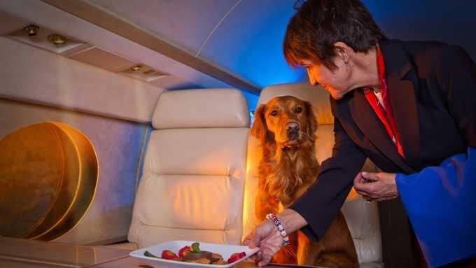 Để chó ngồi cùng phi cơ riêng, chủ bạo tay chi 30.600 USD