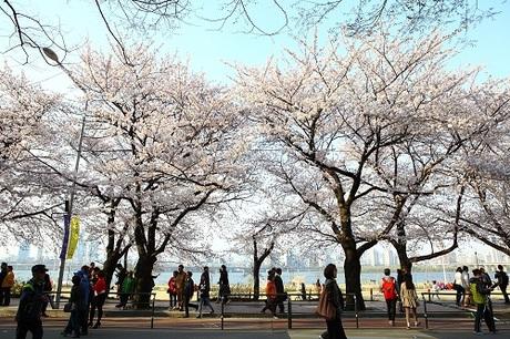 Giữa đất trời mênh mang nơi chốn linh thiêng, bạn sẽ có giây phút tĩnh tại trong tâm hồn và nguyện cầu mọi điều tốt đẹp sẽ đến với gia đình, bạn bè.Mùa hoa anh đào nở tại nhàga Gyeonghwa.