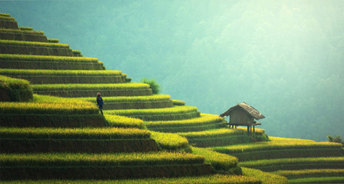 Việt Nam hấp dẫn khách quốc tế vì phong cảnh đẹp. Ảnh: Inspitrip.