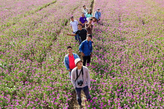 Những cánh đồng hoa 'gây sốt' thời gian qua