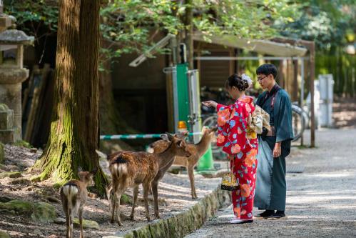 Cho nai ăn là trải nghiệm hút khách ở Nara. Ảnh: JapanTimes.