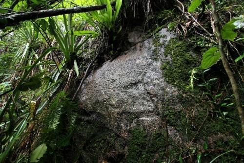 Hòn đảo được che phủ bởi những cánh rừng rậm rạp và hoàn toàn vắng bóng người. Ảnh: Amusing.