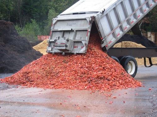 Ngày nay nông dân Mỹ vẫn dùng vỏ tôm hùm làm phân bón. Ảnh:Coast of Maine.