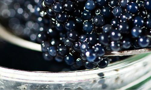 Trứng cá muối caviar - ngọc trai đentừ biển cả. Ảnh: aldi.