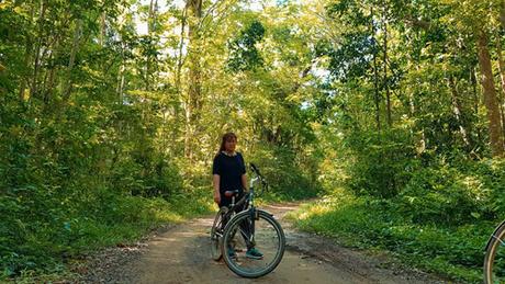 Đường vào rừng Nam Cát Tiên.