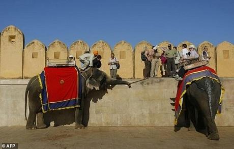 Những con voi chở khách ở pháo đài Amer. Ảnh:AFP.