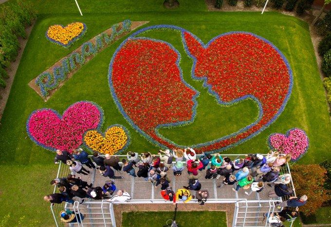 Vườn hoa tulip đẹp như tranh vẽ ở Hà Lan