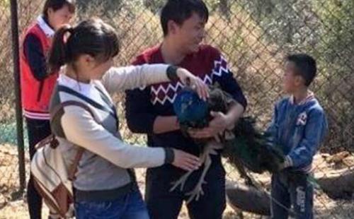 Khách Trung Quốc giật trụi đuôi công trong vườn thú